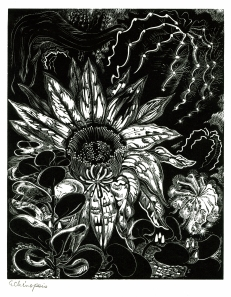 June Crisfield Chapman's wood engraving 'Echinopsis'