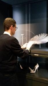 Fan of Lady Amhurst feathers