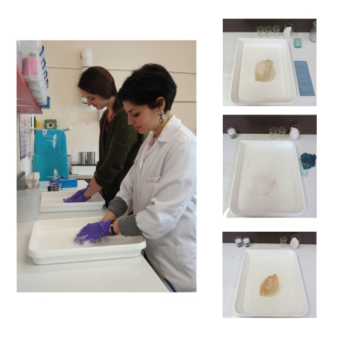 During the wet cleaning: Emily and I at the sponge cleaning procedure (left). At right, images of lace no.287 during the soak (top), lather (centre) and rinse (bottom)