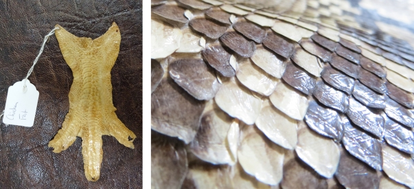 A tanned chicken foot, and detail of tanned python skin
