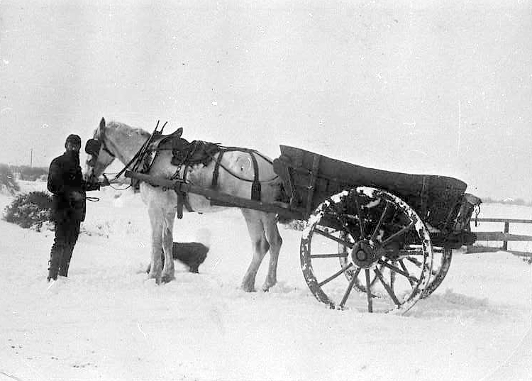 Another Pattison photograph, entitled 'Jim Dodds with horse and cart in snow', 1973.43.23/ARC.