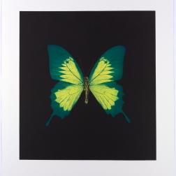 Damien Hirst, printmaker 2010 (1)