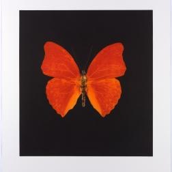 Damien Hirst, printmaker 2010 (2)