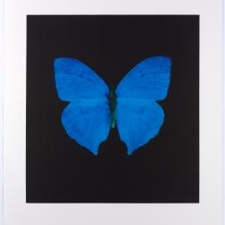 Damien Hirst, printmaker 2010 (3)